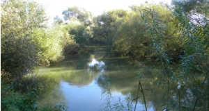 A Borzsa folyó Fotó: panoramio.com