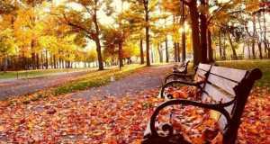 őszi fák 1