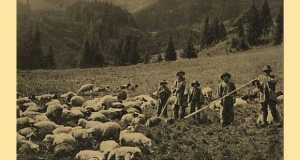 Hucul pásztorok a Kárpátokban (www.carpathy.nadvirna.com)